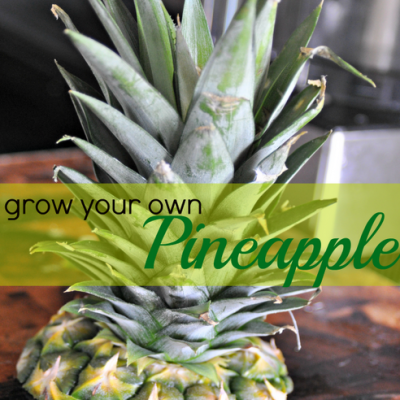 How To: Grow Your Own Pineapple