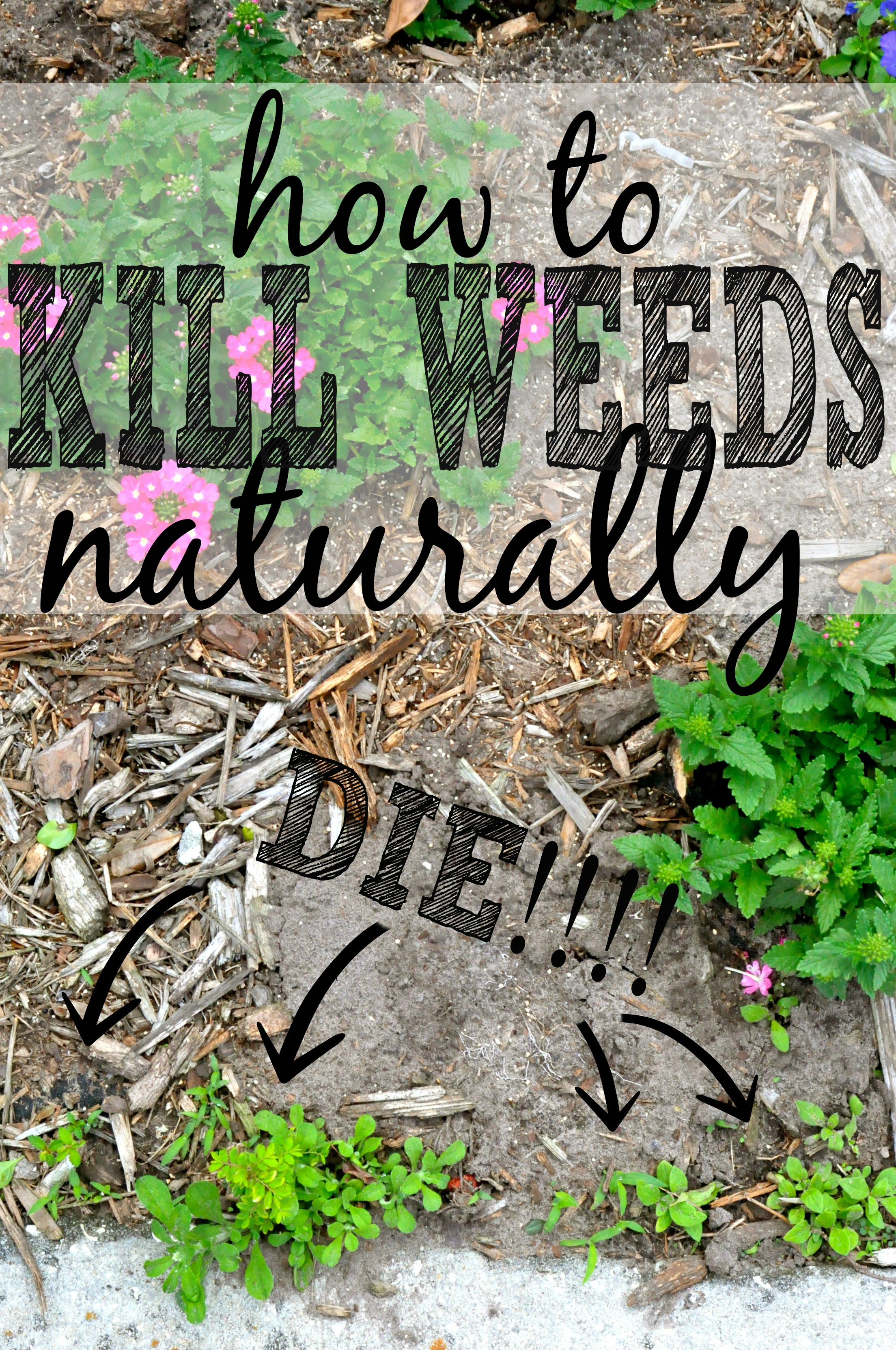 3 Ways To Get Rid Of Weeds Naturally First Home Love Life
