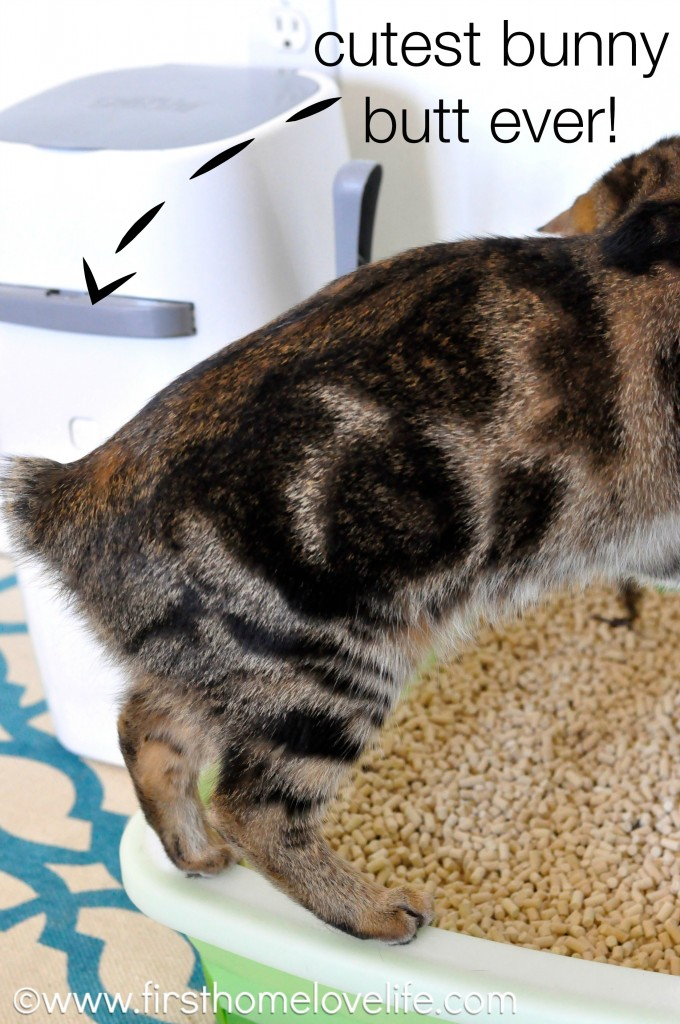 No more litter box odor with this simple system! #pets #cats