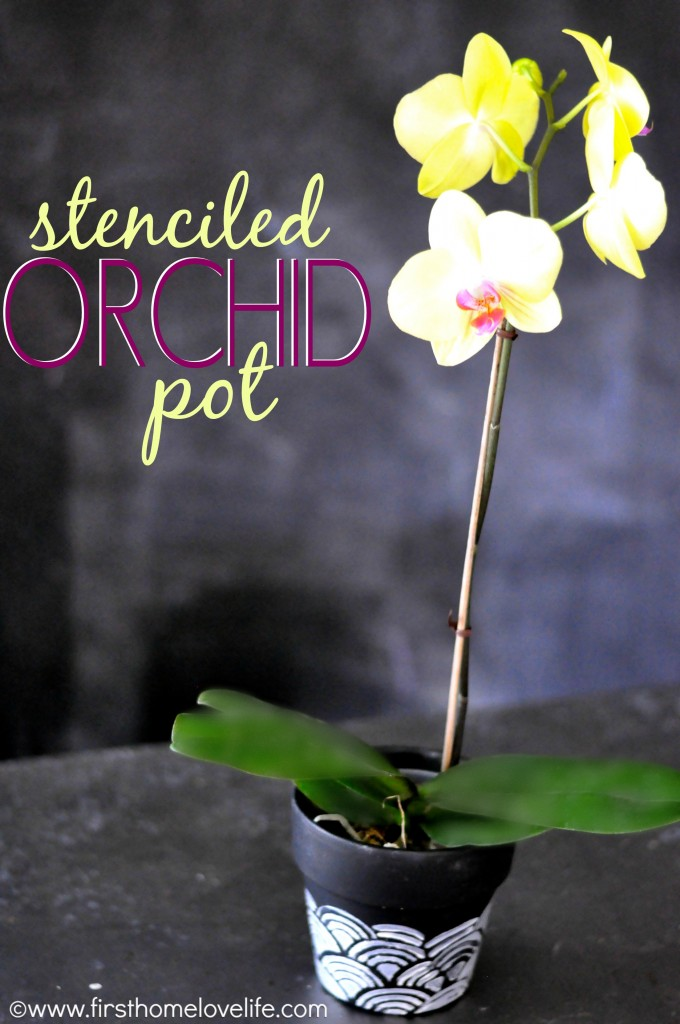 orchid cover