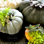 DIY SUCCULENT PUMPKINS- PERFECT DIY CRAFT FOR FALL- GREAT DECOR FOR HALLOWEEN AND THANKSGIVING via firsthomelovelife.com