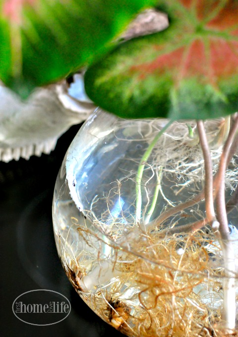 exposed-roots-in-a-glass-vase-really-cool-floral-arrangement-idea-via-firsthomelovelife-com