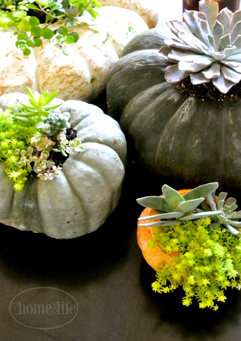 succulent-potted-pumpkins-via-firsthomelovelife-com