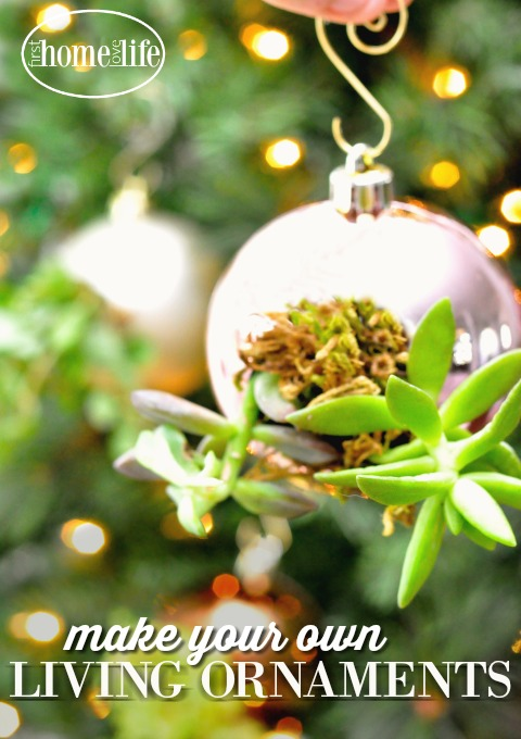 diy-christmas-project-make-your-own-living-ornaments-with-succulents-via-firsthomelovelife-com