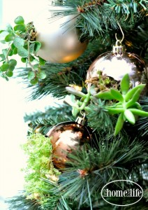 These DIY succulent ornaments are the perfect DIY gift idea for the holidays! Make them to hang on your Christmas tree or give as a gift via firsthomelovelife.com