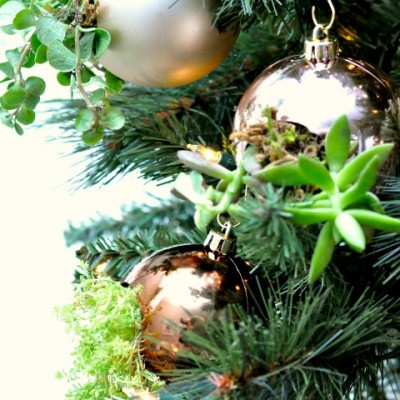 DIY Succulent Ornaments